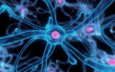 Decodificación de la Memoria Celular